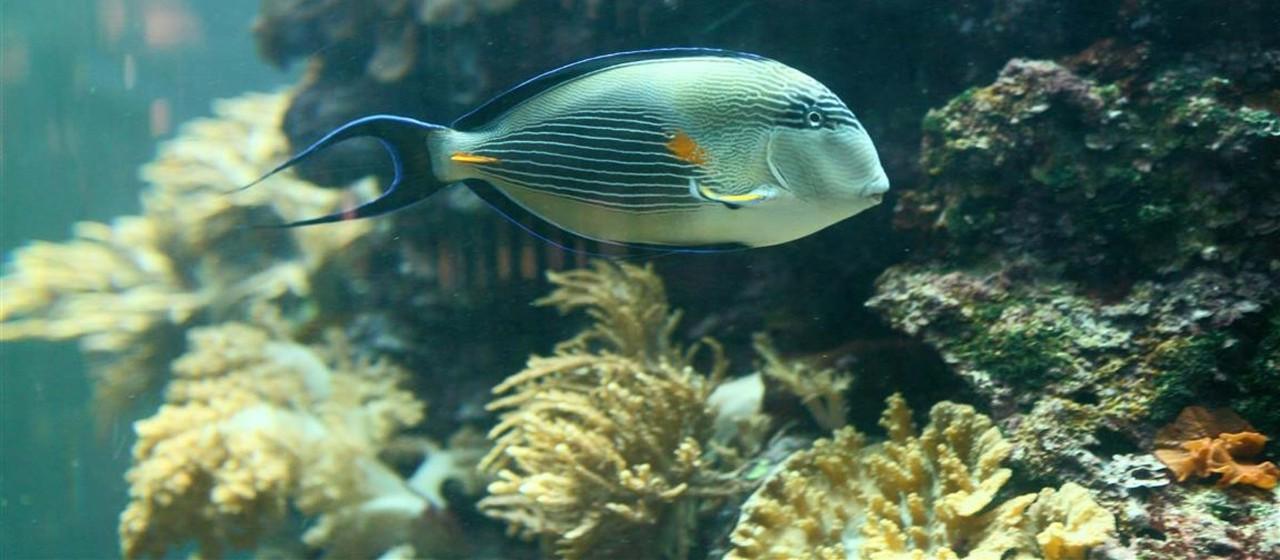 Nahaufnahme eines Fisches aus dem Meerwasser-Aquarium in der Geschäftsstelle Osterholz-Scharmbeck.